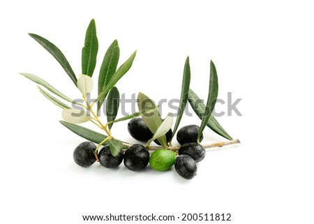 Olive branch with leaves and a green and black olives - stock photo