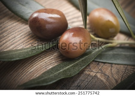 olive branch with three olives from Liguria (Italy)  - stock photo