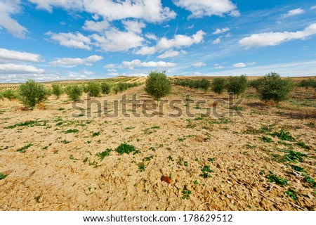 Olive Grove in Spain - stock photo