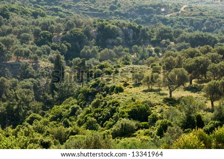 Olive grove in the hills in Greece - stock photo