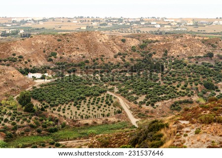 Olive groves around Kardamena as seen from the fortress Antimachia. Kos island, Dodecanese