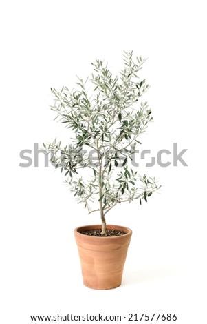 olive isolated on white - stock photo