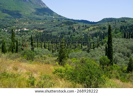 Olive orchards in the hills - Corfu island, Greece