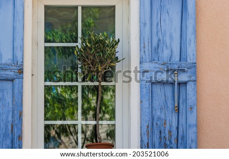 Olive plant in front of window with blue shutters and reflections of green trees in the panes.