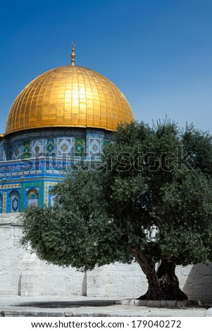 Olive tree against of the Mosque Dome of the Rock on the Temple Mount, Jerusalem, Israel - stock photo