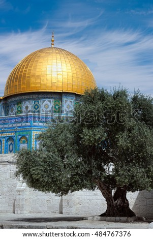 Olive tree against of the Mosque Dome of the Rock on the Temple Mount, Jerusalem, Israel