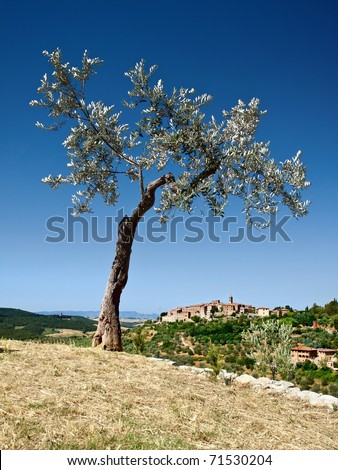 Olive tree and look into the Tuscan countryside - stock photo
