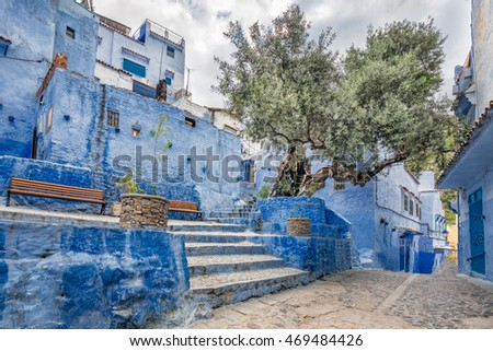 Olive tree at famous blue city of Chefchaouen, Morocco.
