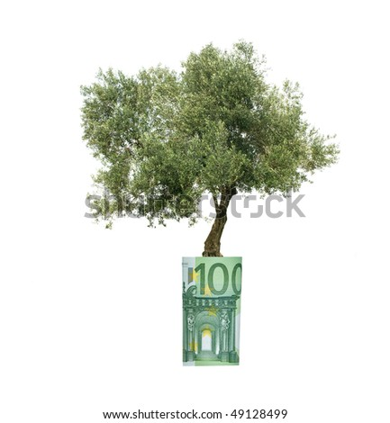 Olive tree growing from euro bill - stock photo