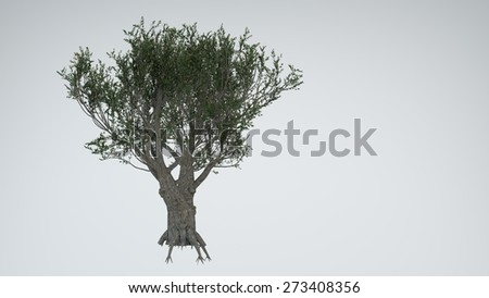 olive tree isolated - stock photo