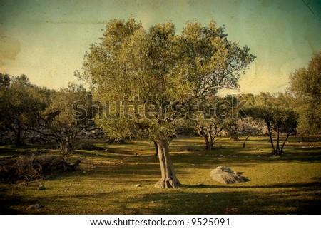 Olive tree on vintage background - stock photo