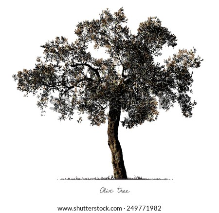 Olive Tree silhouette - stock photo