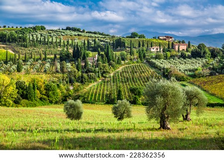 Olive trees and vineyards in a small village in Tuscany - stock photo