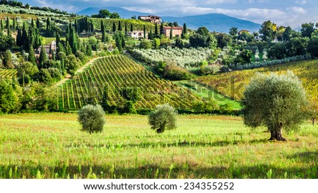 Olive trees and vineyards in Tuscany