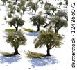 Olive Trees Grove after snow Storm in Jerusalem Olive Mountain - stock photo