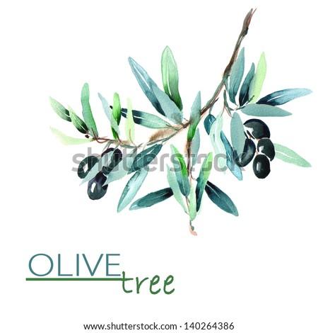 Olive Twig - stock photo