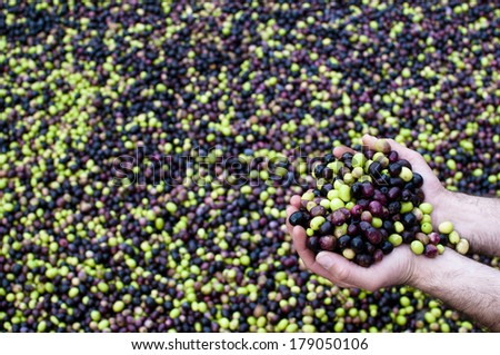 Olives and olives in hand  - stock photo