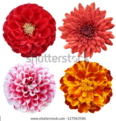ollage with colorful flowers - stock photo
