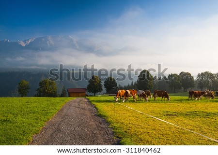 On a farm in the high mountains in Austria - stock photo