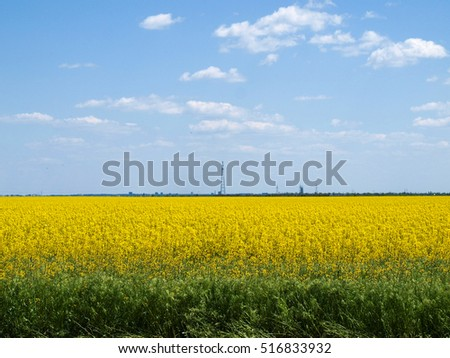 On a sunny summer day rape field looks very bright and decorative