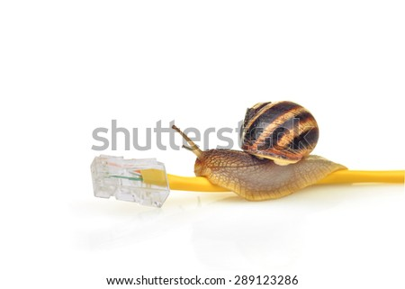 On-line connection with snail speed. Snail crawling on a yellow network cable - stock photo