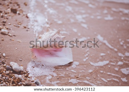 on the beach against the sea lies the beautiful white shell