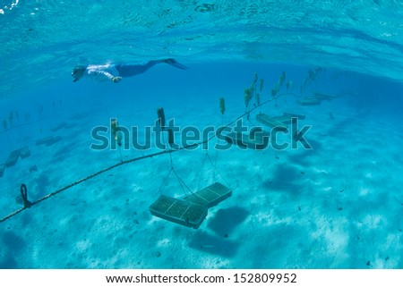 On the island of Aitutake, in the Cook Islands, locals are growing corals and giant clams in a shallow part of the lagoon. - stock photo
