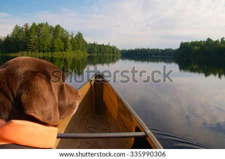 On the lookout the dog looks ahead - stock photo