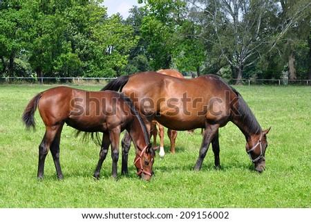 on the pasture - stock photo