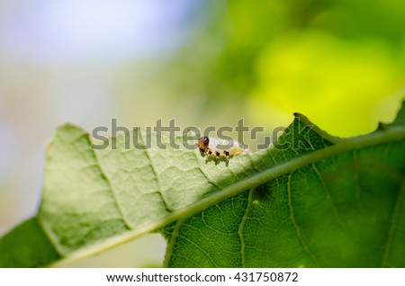 on the sunny side (sawfly larva)