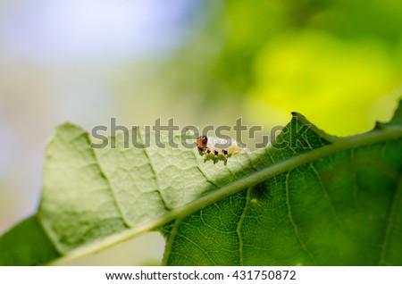 on the sunny side (sawfly larva) - stock photo