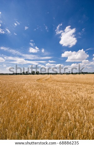 On this picture you can see a field and a beautiful sky. - stock photo