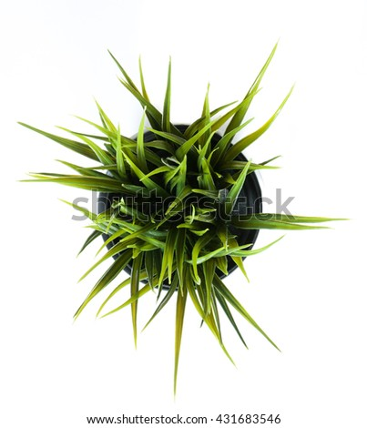 On top decorative grass in flowerpot isolated on white background - stock photo