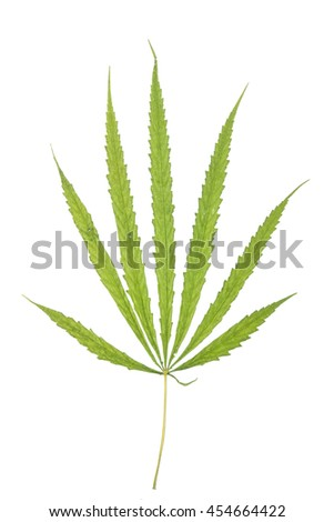 On top of dried marijuana leave on white background. - stock photo