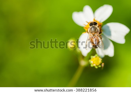 On top of honey bee with flowers. - stock photo
