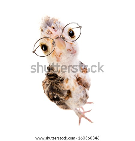 one adolescent comose chick stand on grey background, close up, look on camera in eyeglasses - stock photo