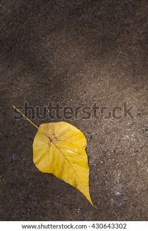 One autumn leaves on a dark background. Fall. - stock photo