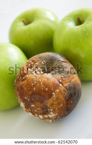 One bad apple amongst three fresh green - stock photo