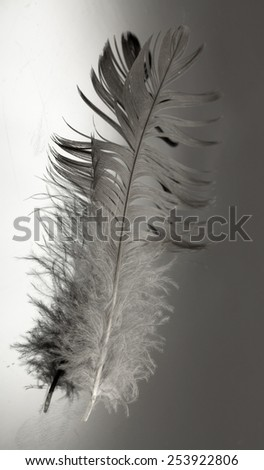 one bird feather