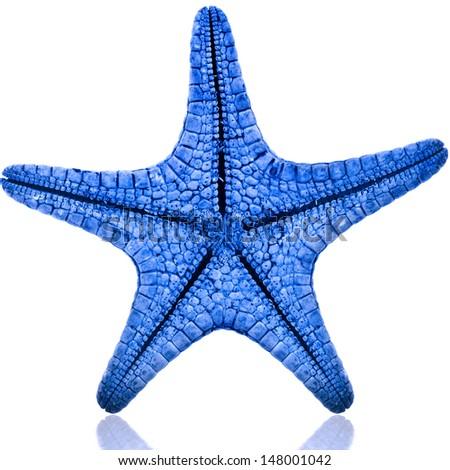 One Blue starfish close up isolated on white background  - stock photo