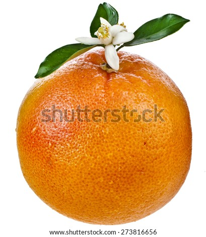 One citrus grapefruit detail close up isolated on white background - stock photo