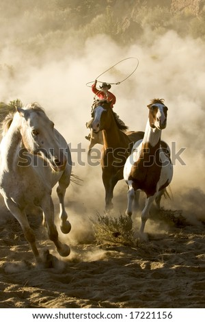 One Cowboy galloping and roping wild horses in the desert