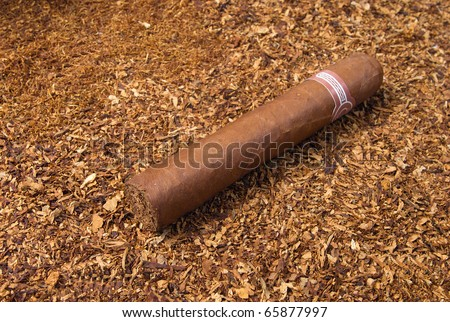 one cuban cigar ,handmade freshly rolled cigars,disposit of the tobacco - stock photo