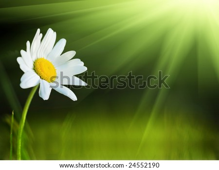 One daisy and the sun - stock photo