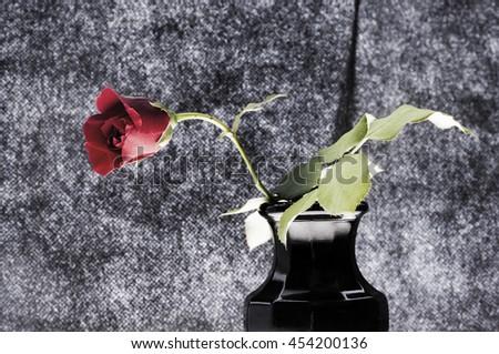 One dark red rose on black - stock photo