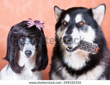 one dog holding a hairbrush other dog sitting near in stylish wi