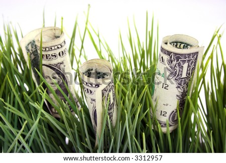 one dollar bills growing in the grass - stock photo