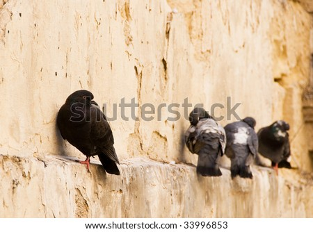 One dove left out of the crowd - stock photo