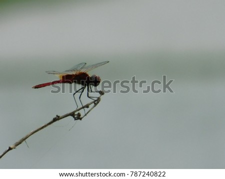 One Dragon Fly...