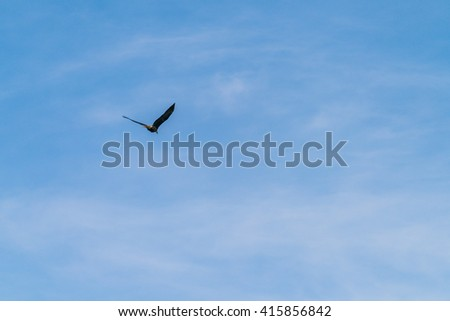 one eagle on the top of the tree against the  blue sky. - stock photo